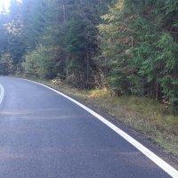 Vanzare teren forestier  Transalpina lac Vidra Comision 0